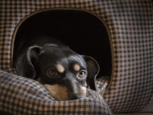 using english idioms - in the doghouse