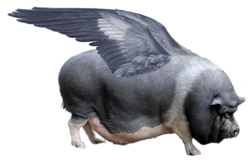 using english idioms - flying pig